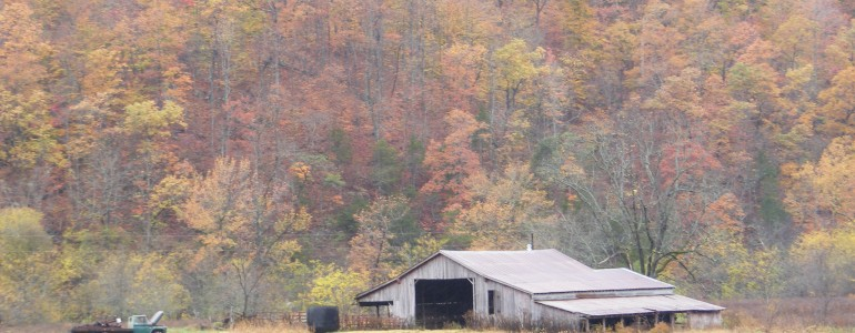 fall color3