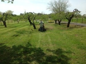 Fruit Orchard Maintenance